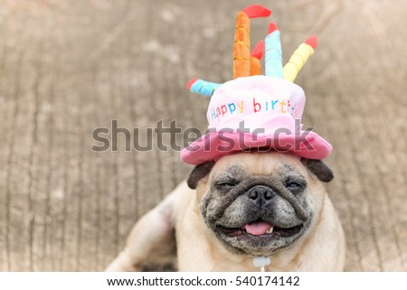 Pug Dog Wearing Pink Happy Birthday Hat With Blurry Background 540174142