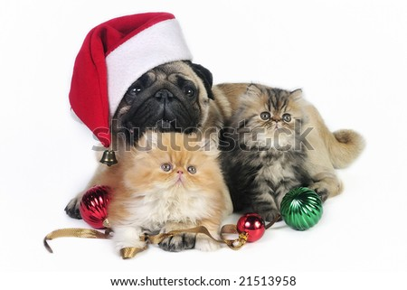 Pug dog wearing Santa hat with two little Persian kittens, surrounded by Christmas ornaments.