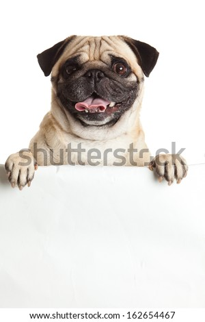 pug dog with bunner isolated on white background. design #162654467