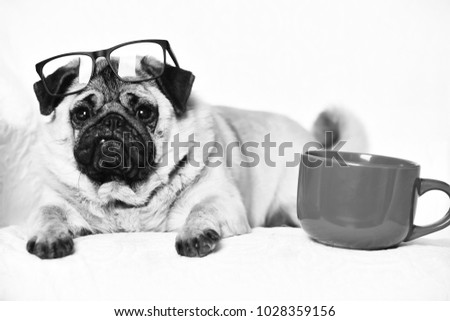 Pug dog with light brown fur and black muzzle wearing glasses sitting on chair near red mug for coffee or tea Zdjęcia stock ©