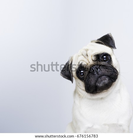 pug doubt
