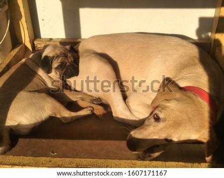 Pug female and labourer female