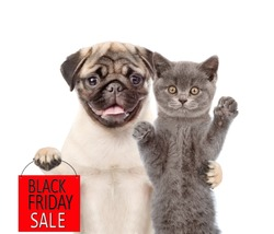 Pug puppy with cat holds shopping bag with black friday text. isolated on white background