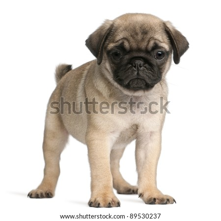 Is My Pug Pregnancy http://www.parentsconnect.com/pregnancy/preparing-for-baby/baby-names/baby-names-games-message-board/154363