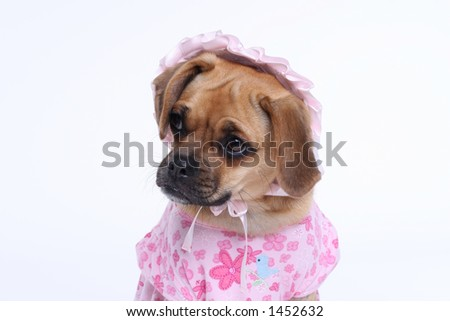 puggle puppy in pink dress with bonnet