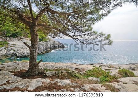 Puglia, Italy, August 2018, Cala Zio Cesare of San Domino island with Aleppo pine in foreground  Zdjęcia stock ©
