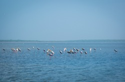 pulicat Birds sanctuary..