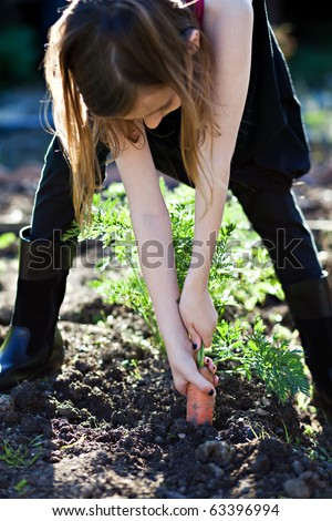 Pulling carrots out of the ground