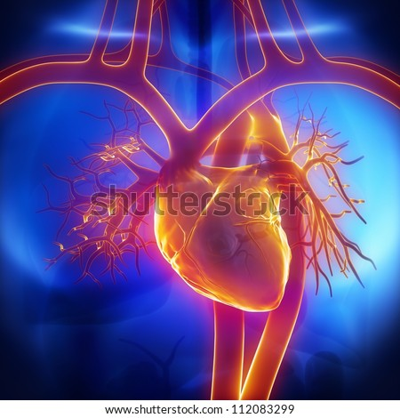 Pulmonary trunk, vein, aorta in heart - stock photo