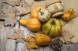pumkin autumn halloween orange  orange food
