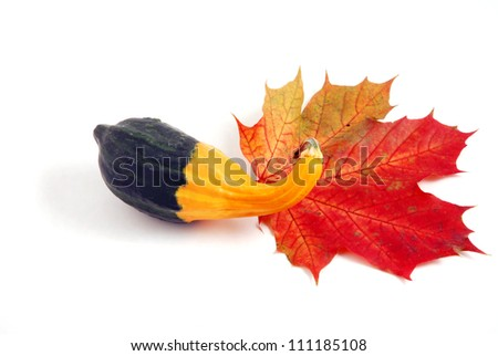 pumpkin and autumn leaf