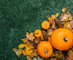 Pumpkin and autumn season leaves on grass background