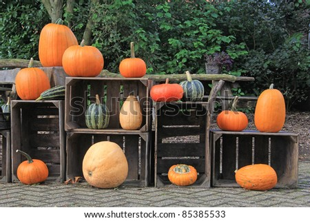 Pumpkin and gourd outdoor display