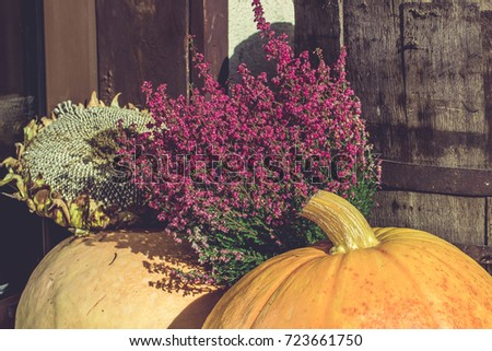 Pumpkin And Heather Autumn Decoration With Wooden Rustic Background 723661750