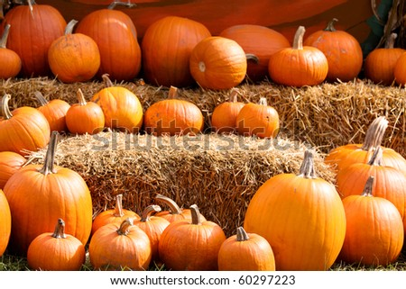 Pumpkin arrangement on hay for autumn sale