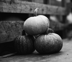 pumpkin black and white photography