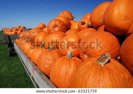 Pumpkin Carts