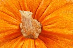 Pumpkin close-up