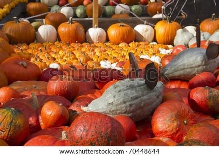 Pumpkin display on pumpkin festival