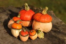 pumpkin family.Autumn  Thanksgiving Background - orange pumpkins over wooden table Rustic autumn still life with pumpkins. Halloween