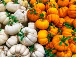 Pumpkin fantasy for Chinese newyear
