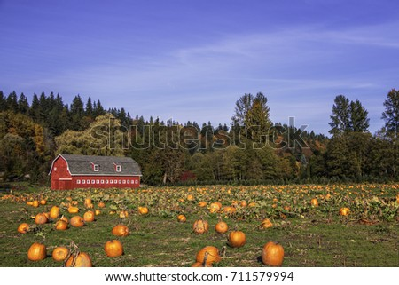 Pumpkin Field in Fall #1. Pumpkin patch with Autumn colors.