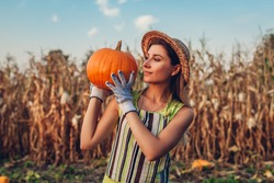 Pumpkin harvest. Young woman farmer picking autumn crop of pumpkins on farm. Agriculture. Thanksgiving and Halloween preparation