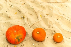 pumpkin in nature. autumn holiday harvest festival Halloween. day of the dead. Hallowmas.