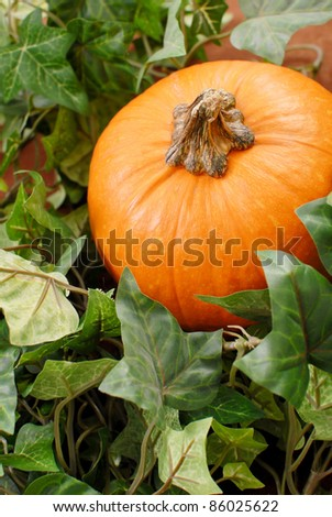 Pumpkin in the Midst of Leaves