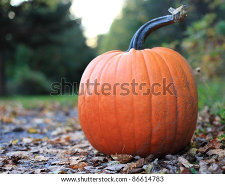 Pumpkin on a deserted road