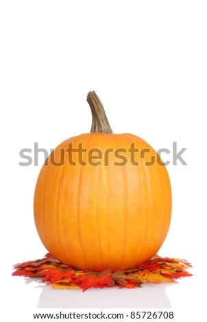 pumpkin on fall leaves