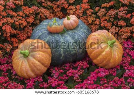 pumpkin on flower background #605168678