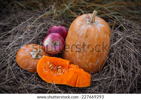 Pumpkin patch field with different typ of huge pumpkins for halloween or thanksgiving holiday.