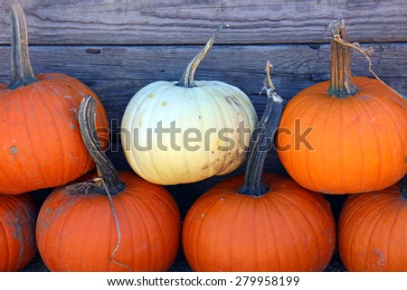 stock-photo-pumpkin-patch-for-autumn-season-at-market-place-279958199.jpg