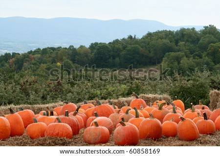 Pumpkin patch on a farm with a view.