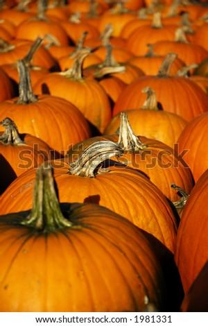 pumpkin perspective vertical - stock photo