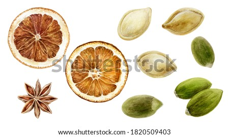Pumpkin seeds dried orange anise set watercolor painting isolated on white background