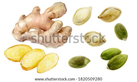 Pumpkin seeds ginger root and slice set watercolor painting isolated on white background