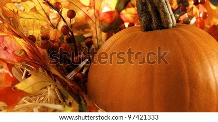 Pumpkin sitting on fall leaves