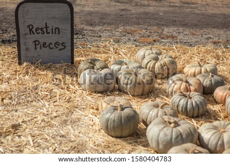 Pumpkin stalks on display for sale at pumpkin patch with funny epitaph for Halloween theme. Holiday-themed image. The variety of pumpkin: Blue Pumpkin. #1580404783