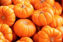 Pumpkin Stalks on display for sale at supermarket.