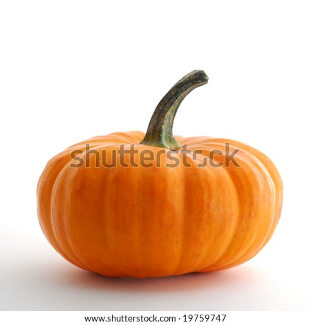 Pumpkin studio isolated on white background