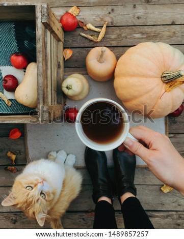 Pumpkin, tea and autumn leaves. Autumn still life with pumpkin, cat and cup of tea on the wooden background. Thanksgiving, autumn season. Cat sitting near pumpkin.