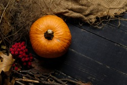 Pumpkin with dry autumn leaves, red berries and sackcloth on black wooden background. Autumn harvest, healthy organic food concept. Copy space.