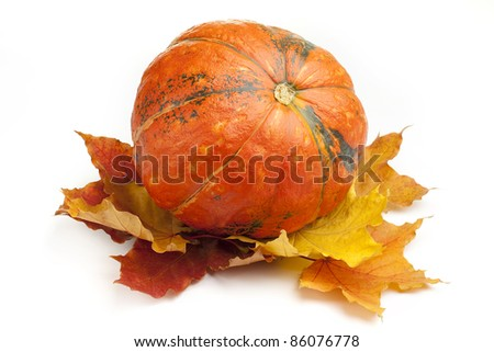 Pumpkin with fall leaves on white background