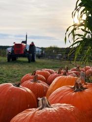 Pumpkin with tractor. Autumn on farm.