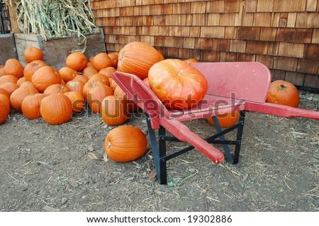 Pumpkins #19302886