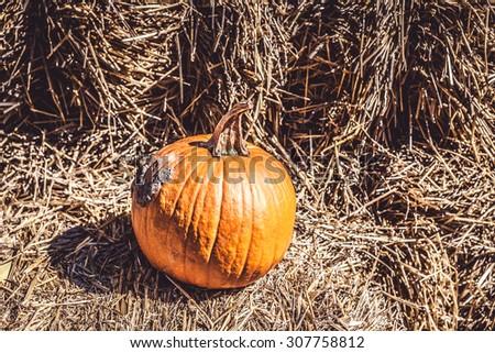 Pumpkins #307758812