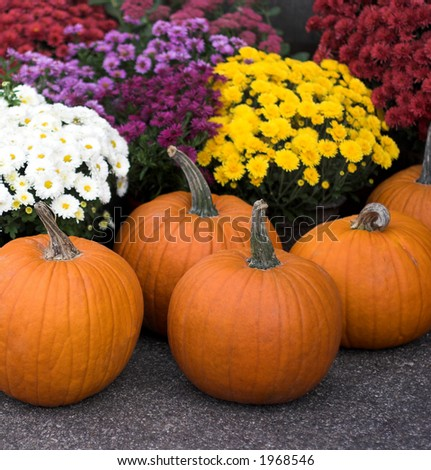 Pumpkins and colorful flowers, focus on pumpkins