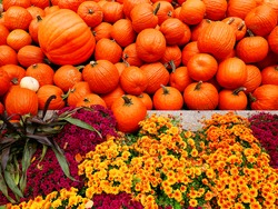 pumpkins and flowers during Halloween at autumn/fall in front of the Rockefeller center in New York USA